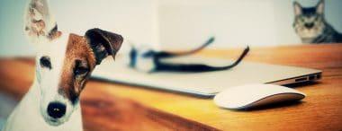 10 professioni per chi ama gli animali