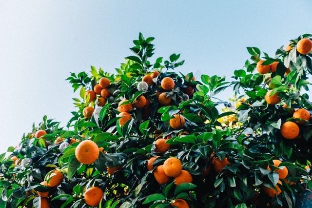 fruttivendolo_Agricoltor