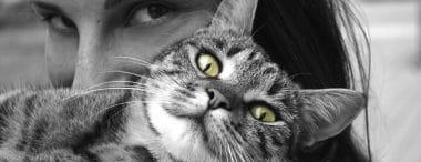 Lavorare con gli animali: 5 professioni anche per chi è senza laurea
