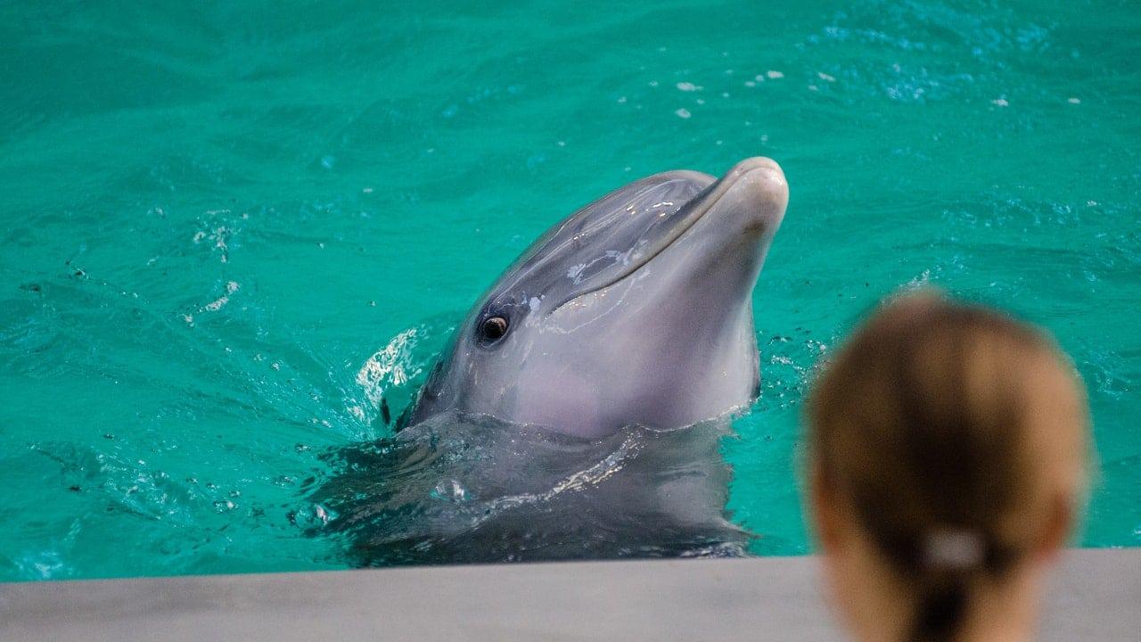 Lavori per gli amanti degli animali marini