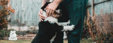 Le professioni per gli amanti degli animali